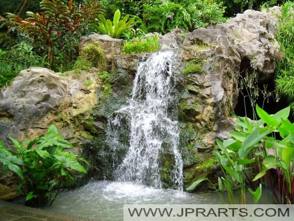 Ginger Garden Singapore Botanic Garden