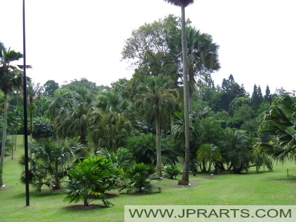 Singapore botanic gardens best photos and videos for Au jardin singapore botanic gardens
