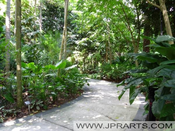 Singapore botanic gardens best photos and videos for Au jardin les amis singapore botanic gardens
