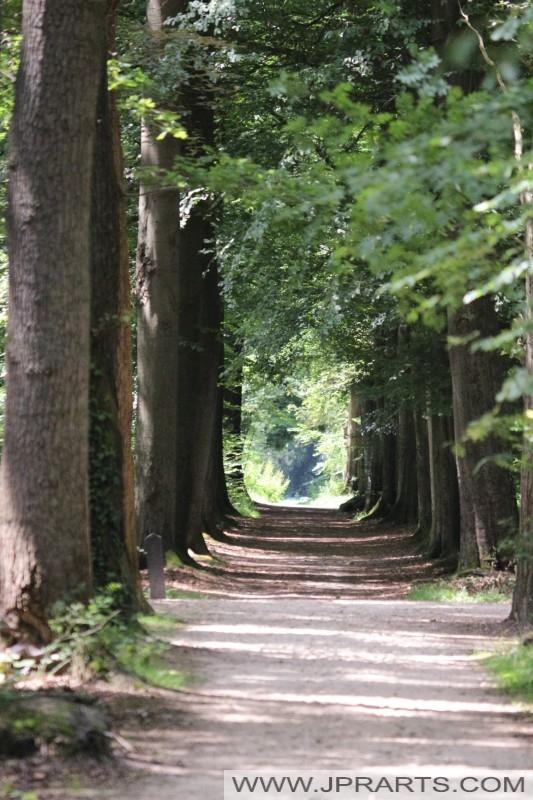 bospad in Asserbos (Assen, Nederland)