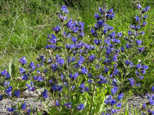 Флора планината Бистра (Македонија)
