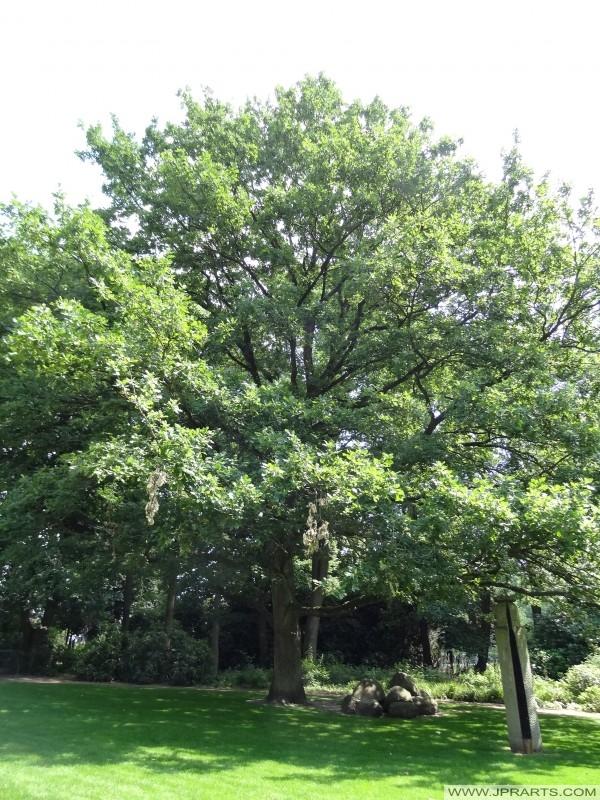 bel arbre dans la Gouverneurstuin (Assen, Pays-Bas)