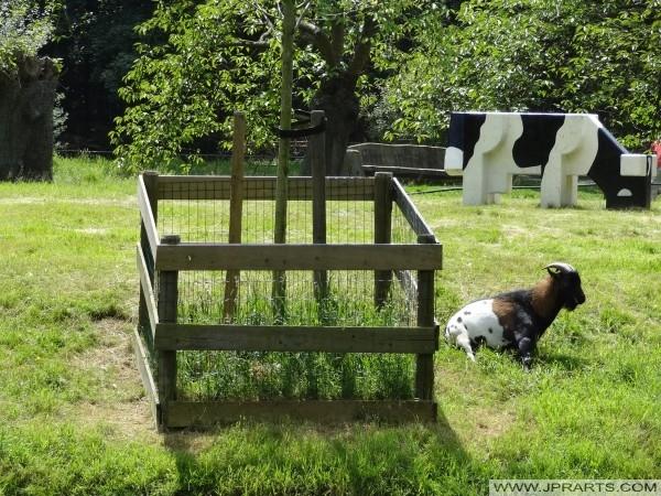 ged med en falsk ko på baggrund i børnezoo i Assen, Holland