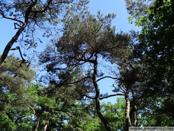 Bomen in de Emmerdennen (Emmen, Nederland)