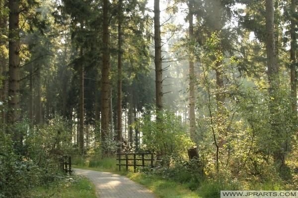 Best Forest Photos