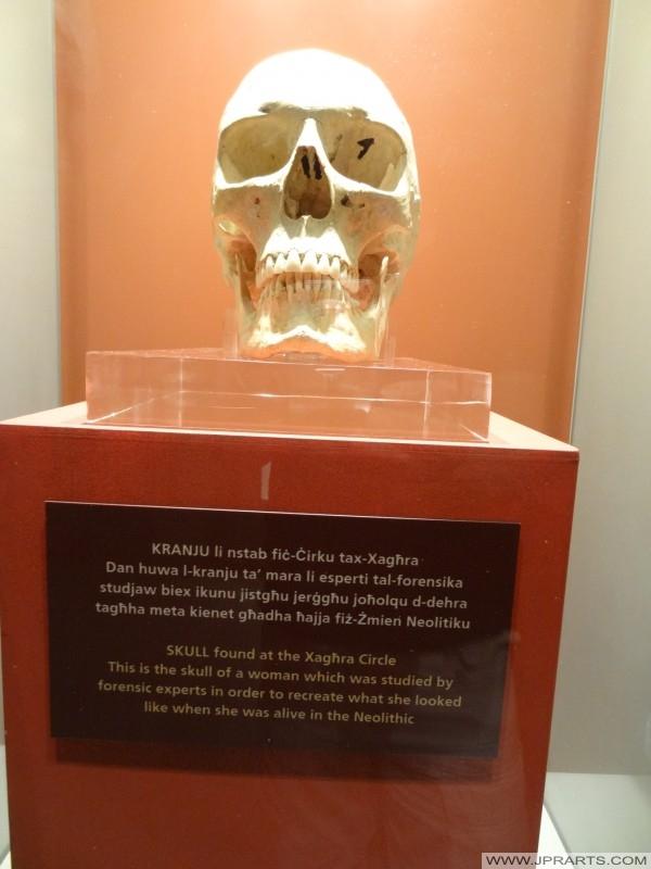 Schädel gefunden im Kreis Xaghra (Ggantija Museum, Gozo, Malta)