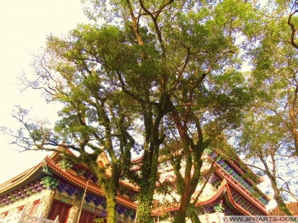 修道院昂坪,香港