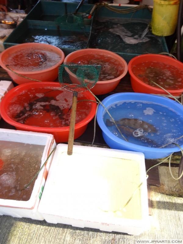 świeże ryby na sprzedaż w wiosce rybackiej Tai O, Hong Kongu