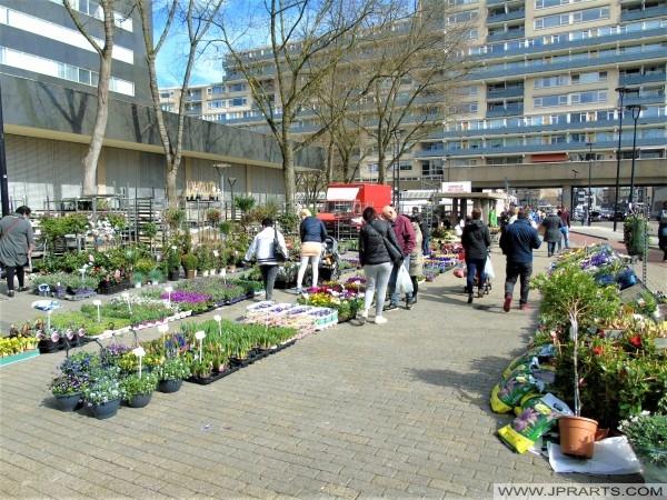 Plantas en el Mercado de Tilburg (Países Bajos)