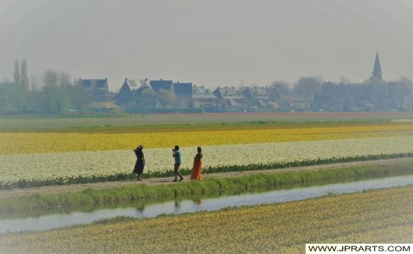 Fotografieren in der Blumenzwiebeln-Region, Niederlande