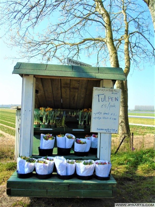 Sale of Tulip Bulbs in the Bulb Region, the Netherlands