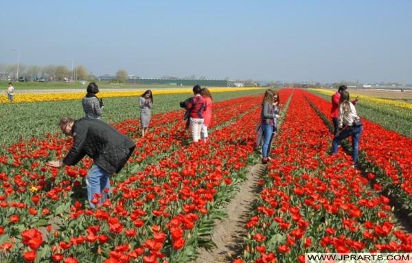 Toeristen in de Bollenstreek, Nederland