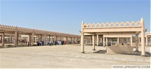 Besuch der königlichen Kamelfarm in Bahrain