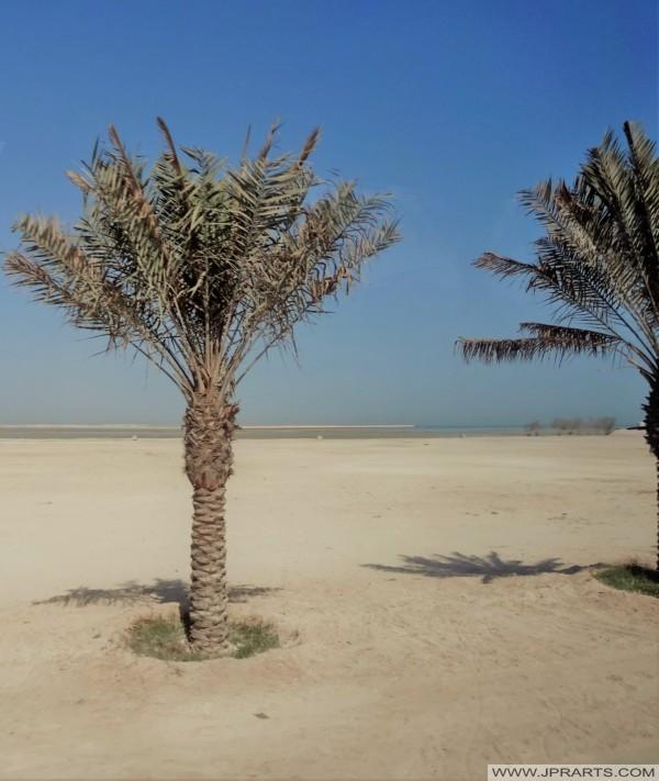 Landscape in Bahrain